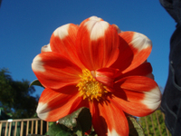 Oranflow01